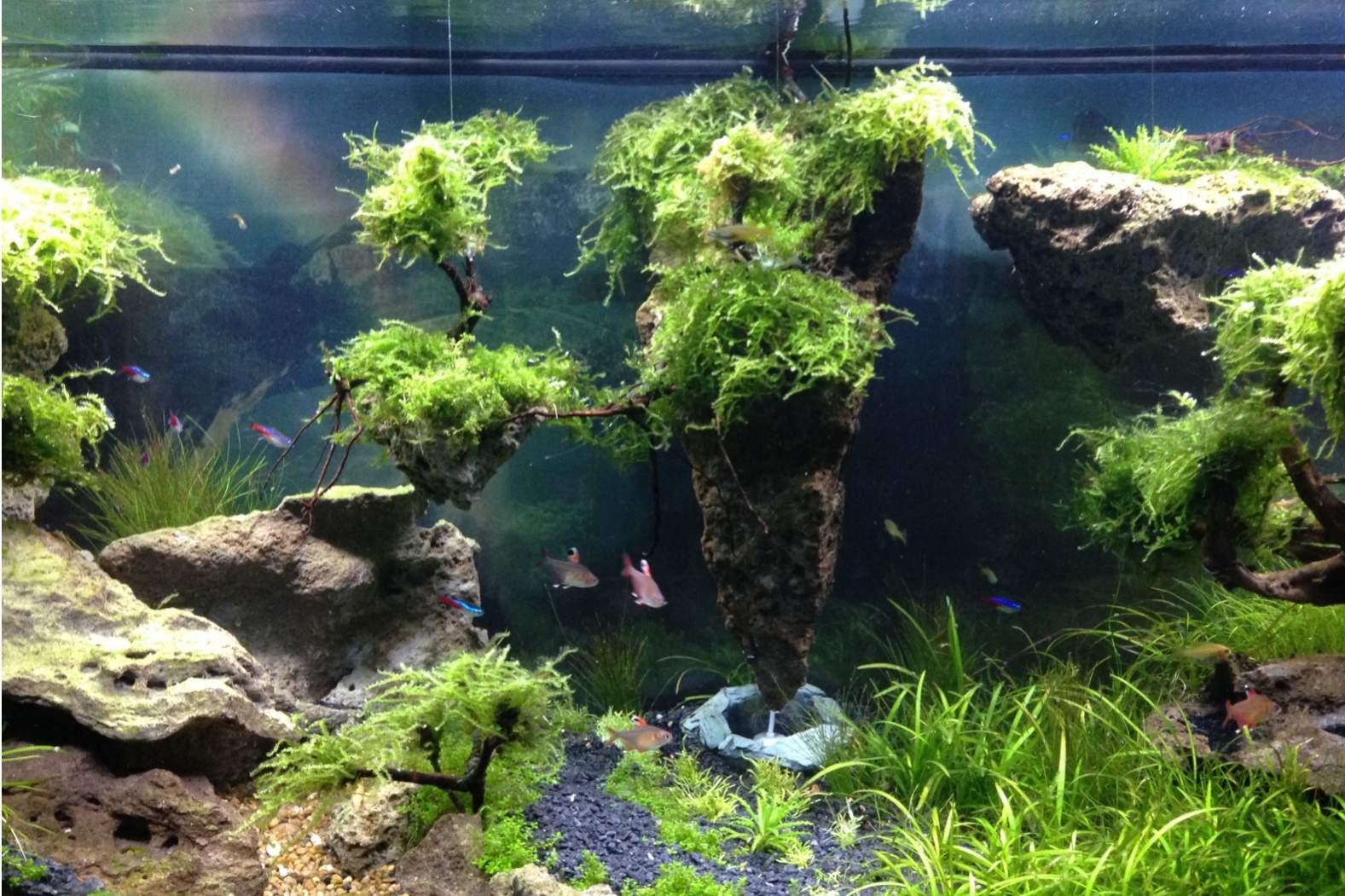 Aquascape Quot Floating Island Quot Pesona Alam Dalam Ruang Part 2 Oleh Moh Faisol Muttaqin