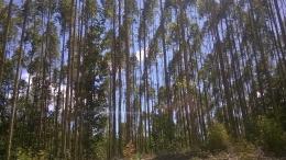 Selama lebih kurang 30 menit perjalanan menuju Arboretum, pemandangan ini akan menyejukkan mata (foto: istimewa)