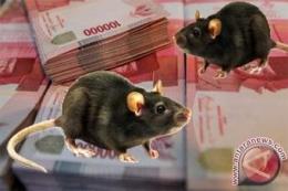 Tikus pengerat uang rakyat, terus bergelimpangan ditangkap. (dok.antaranews.com)