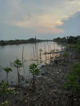 pemandangan sore hari di hutan mangrove