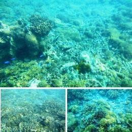 Terumbu karang (koleksi pribadi)