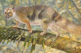Microleo attenboroughi marsupial langka. Ilustrasi: Dr Anna Gillespie