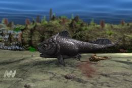 Materpiscis attenboroughi nenek moyang ikan yang ditemukan di Australia Barat. Sumber: Museum Victoria