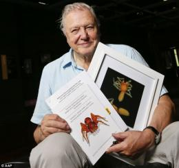 David bersama laba laba goblin nya. Photo: i.dailymail.co.uk