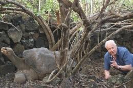 Ketika melakukan reuni dengan kura kura purba di kepulauan Galapagos yang pernah liputnya puluhan tahun yang lalu. Photo: www.ironammonite.com