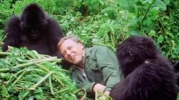 Ketika meliput gorila di tahun 1990 an. Photo: week.watch