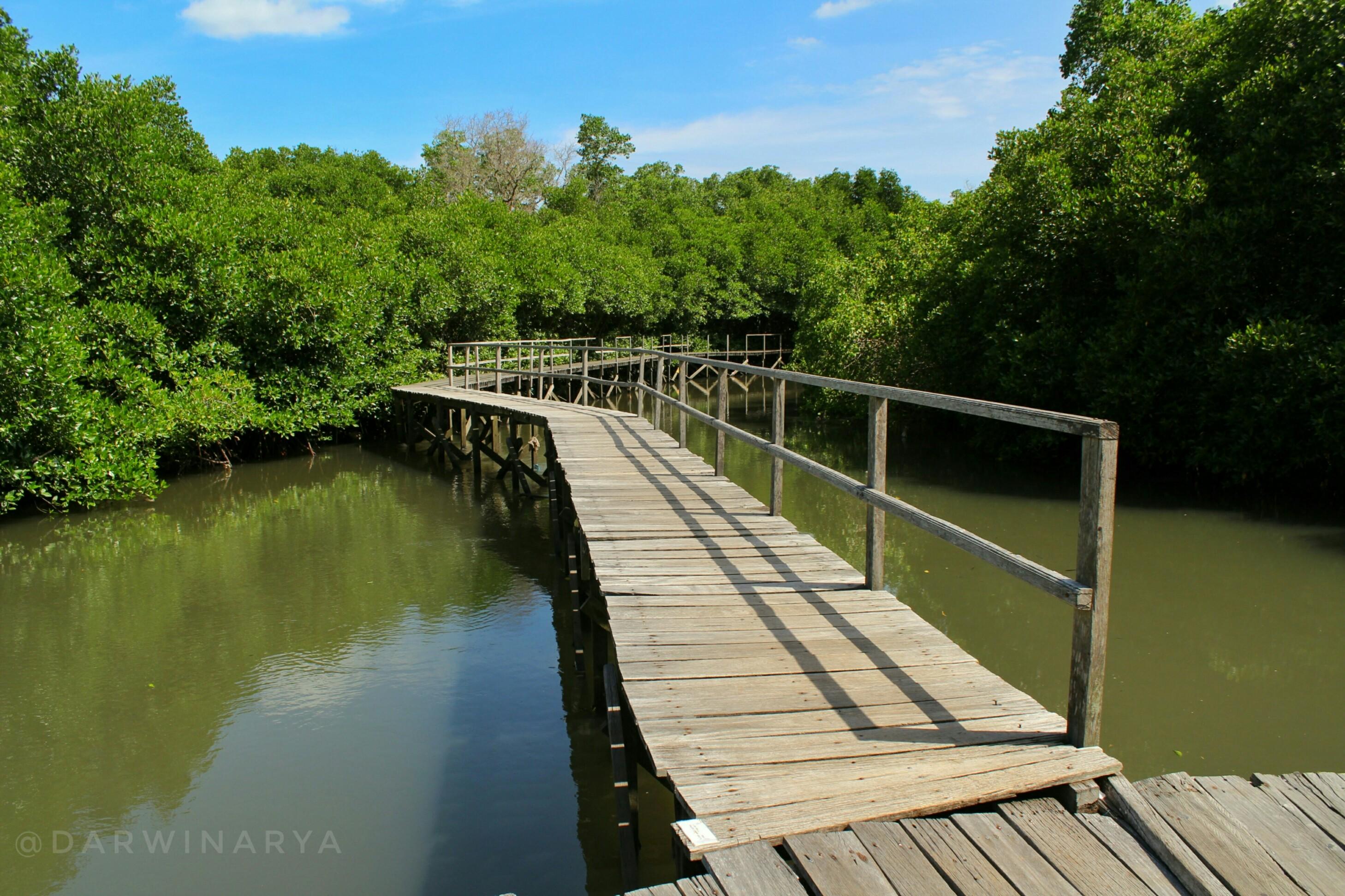 Jembatan Kayu Hutan Mangrove Bali / dap