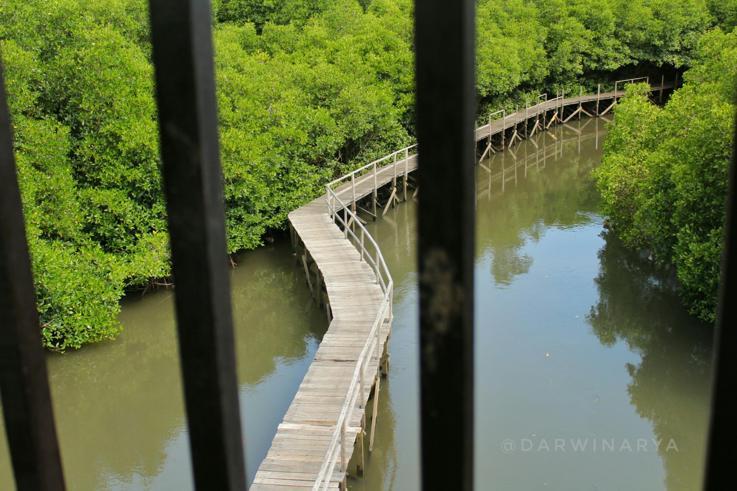 Jembatan Kayu Dilihat dari Tower. Tampak Mirip Sungai Amazon / dap