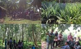 Beberapa perkebunan dan pertanian masyarakat seperti kelapa, nanas dan karet. Foto dok. Yayasan Palung