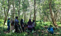 Peserta pelatihan mengunjungi kebun karet warga masyarakat di Desa Padu Banjar. Foto dok. Yayasan Palung