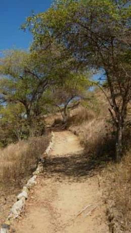 Dokumen pribadi. Jalur trekking di Pulau Komodo yang harus di ikut-i setiap turis.