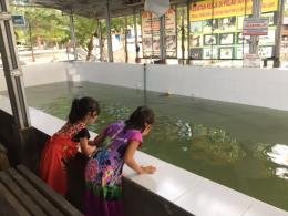 Bintu dan Dhila asyik mengamati penyu dewasa. Dokumentasi pribadi