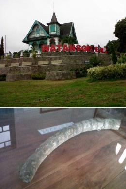 Villa Yuliana yang berfungsi sebagai Museum Latemmamala di kota Watan Soppeng, ibukota kabupaten Soppeng (atas), dan fosil gading gajah temuan dari Lembah Walanae yang menjadi salah satu koleksi museum tersebut (bawah)/Ft: Mahaji Noesa
