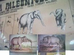 Inilah gambar gajah kerdil endemik Sulawesi dan babi purba yang bertaring besar berdasar temuan fosil vertebrata di Lembah Walanae, Sulsel/Ft Repro: Mahaji Noesa