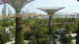 Photo: Botanic Gardens Conservation International