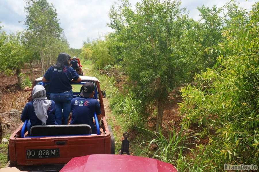 Area Perkebunan Pohon Kayu Putih (Dokumentasi Pribadi)