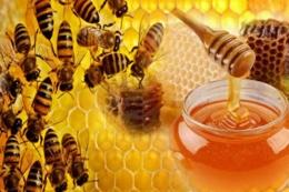 Lebah dan madu. Sumber ilustrasi: madulebah.org