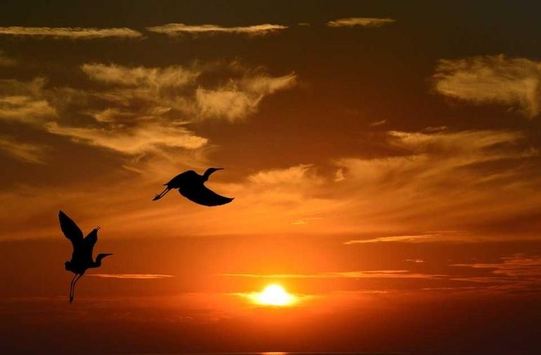 Pict by Pixabay.com