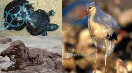 Berbahaya, hewan bisa sengsara atau bahkan mati karena sampah. Foto dok. tribunnews