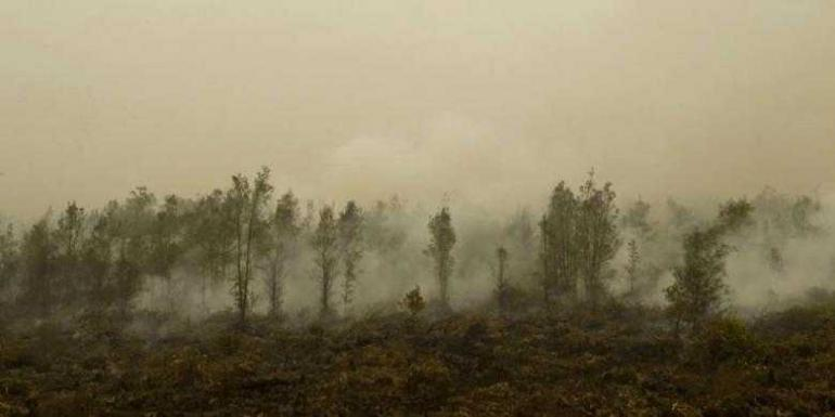 Ilustrasi kebakaran hutan: (AFP PHOTO / ROMEO GACAD)