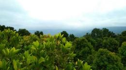 Foto diambil di atas pohon cengkeh, pada saat mulai mendung. (dokumentasi pribadi)