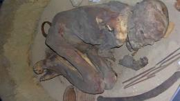 Mumi yang digunakan dalam menelususi bahan yang digunakan dalam proses mumifikasi. Sumber: Stephen Buckley/ University of York