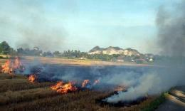 gambar ilustrasi sawah terbakar (sumber: qiyasaad.com)
