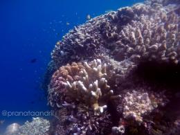 Terumbu Karang California Reef