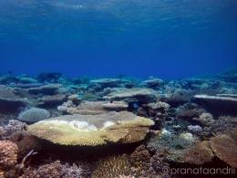 Keindahan Karang Reef 4
