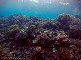 Dinding Karang Reef 5
