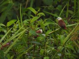 Burung di ranting pohon/dokpri