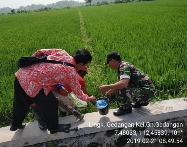 Bela Negara, Binter, Komsos, Bakti TNI, Pertanian, Babinsa, PPL, Poktan, Mojokerto
