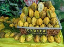 Buah Carica flora Dieng Wonosobo (dok pri)