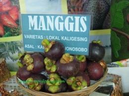 Manggis lokal Kaligrsing, Wonosobo (dok pri)
