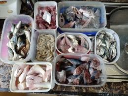 Stok ikan untuk satu minggu (dokumen pribadi)