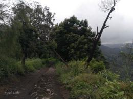 Jalan kaki menyusuri tepi hutan. Dokpri