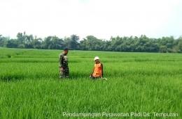 Babinsa Tempuran Koramil 0815/11 Pungging Dampingi Petani Penyiangan Rumput Liar