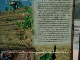 letusan dahsyat Gunung Muria dan Gunung Pati Ayam dokpri