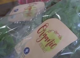 Packaging sayur bayam (dok. pribadi)