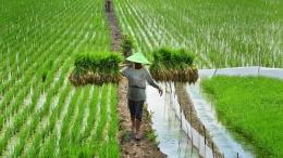 Petani bukan Buruh (Sumber Gambar: cnnindonesia.com)