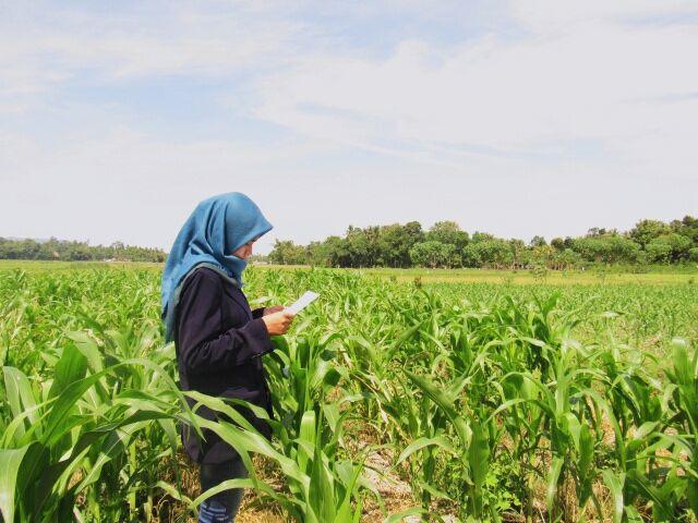 Alih Generasi Petani. (Sumber Foto: dilladrj.wordpress.com)