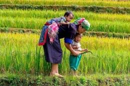 Regenerasi Petani untuk Indonesia Berdaulat Pangan (Sumber Gambar: pertanianku.com)