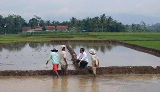 Ilustrasi: Presiden Joko Widodo menyempatkan diri berbincang-bincang dengan petani dalam perjalanannya ke lokasi longsor Banjarnegara, Jawa Tengah (12.2014) (Sumber: jpnn.com/twitter)