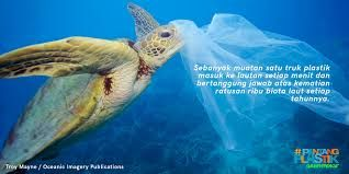 Kura-kura mengira kantong plastik adalah ubur-ubur (greenpeace.org)
