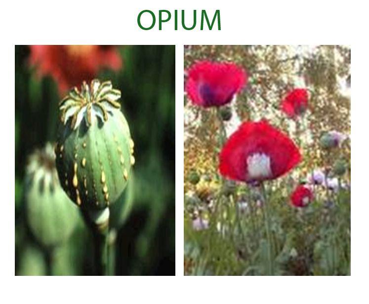 Deskripsi : Contoh Opium I Sumber Foto : Olah Digital