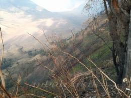 Tunas baru tumbuh di dinding tebing setelah lima hari kebakaran. Dokpri