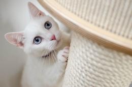 Foto kucing dari pixabay.com (credit: Daga_Roszkowska), satu situs favorit pecinta foto gratisan. Bukan gambar dari sana yang saya permasalahkan.