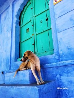 Bangunan biru dengan pintu hijau Tosca, Jodhpur | dokpri
