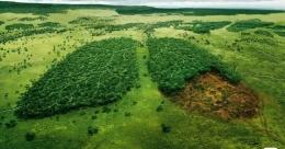 Indonesia dan paru-paru dunia | goodnewsfromindonesia.id
