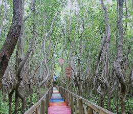 taman mangrove tongke-tongke sinjai